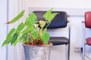 Pflanze der Hausarztpraxis Dr. Nopper.